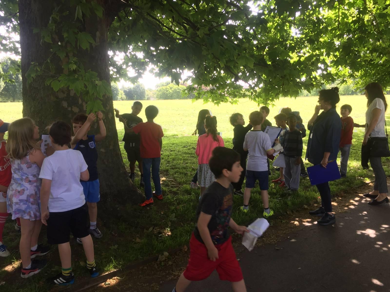 Park Tally Charts - Primrose Hill Primary School